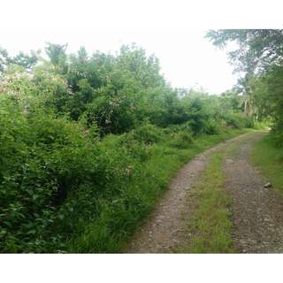 Agricultural Lot for sale Lobo Batangas