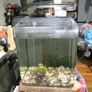 Fish Tanks With Lights & Fan For Sale