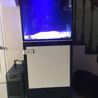 2 ft cube fish tank for sale
