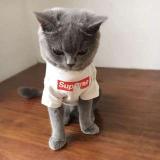 Funny and cute cloths for cats or dogs