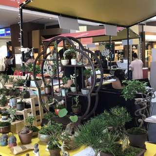 "Mini and Shohin Bonsai Pop Up at Millenia Walk and Great World"" City"