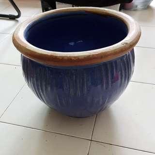 Plants / Flower Pot