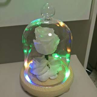 Preserved white rose with Led light