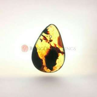 Indonesia amber (with certificate) (琥珀)