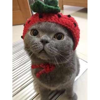 (PO) Strawberry Cupid Pet Cap