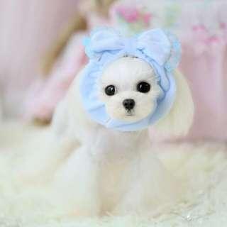 🚚 寵物花邊頭套脖圍圍巾 多種造型