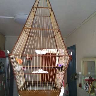 (nego) a  liang jumbul copy ivony cage 17(local)