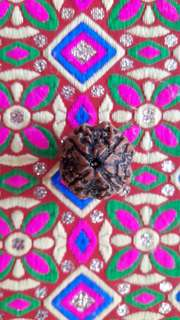 4 face Rudraksha NEPAL