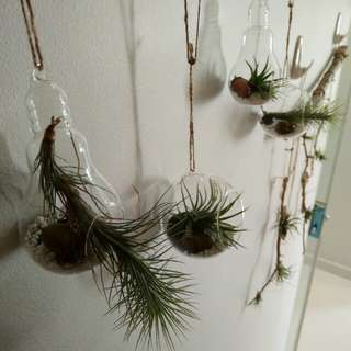 Hanging terrarium with air plant and other decoration.