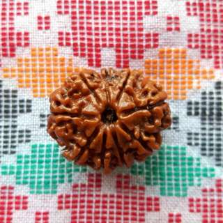 9 Face Rudraksha NEPAL (Genuine and Authentic) LARGE 25mm