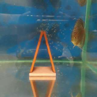 Discus pair for Sell