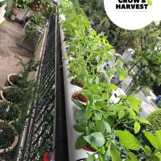 Hydroponic / aquaponic custom  made indoor / outdoor automatic systems