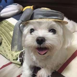 寵物 草帽