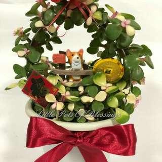 CNY JADE PLANT With deco arrangements