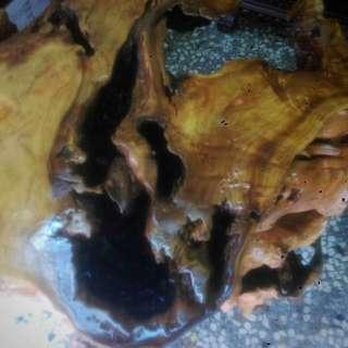 福杉樹瘤-根座-花台架