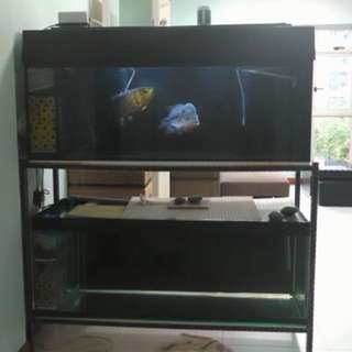 2 Tier 4ft Fish Tank For Sales