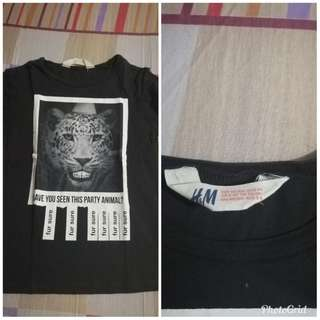 tiger shiry