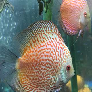 Discus for sharing