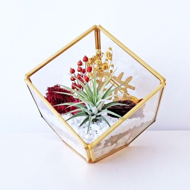 Aerium: Abundance Cube with air plant and preserved flowers