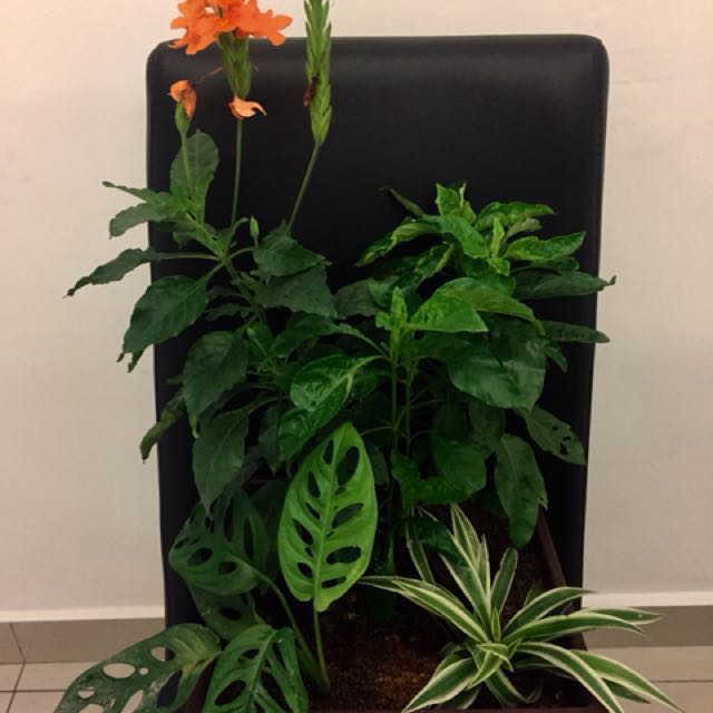 Deco plants in pot( real plants)