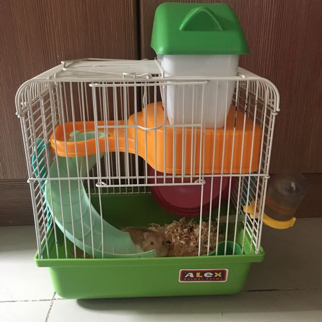 Kandang Hamster Lengkap