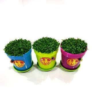 Happy Plant For Office & New Year Gift!