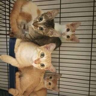 Kittens / Cat For Adoption