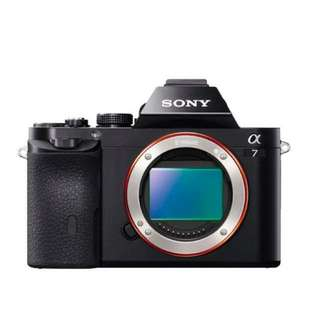 SONY Mirrorless Digital Camera Alpha 7 Body Only