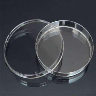 Glass Petri/Feeding Dish (60mm / 70mm)