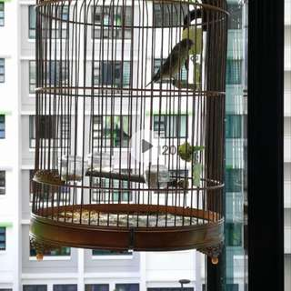 Finch cage canary cage ( set deal) no bird