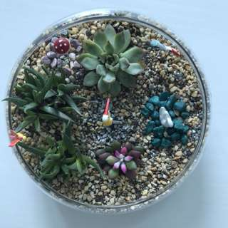 Terrarium with 4 succulents