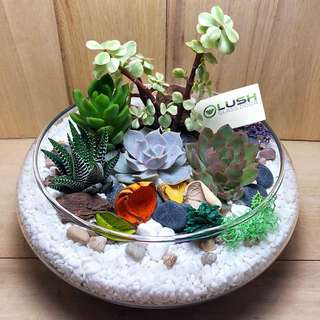 ❤️Perfect Gift for Mother's Day/ Valentine's Day/ V Day/ Christmas/ Birthday/ Congrats/ Farewell/ House warming/ - Real Plant Succulents/ Cactus Terrarium LIMITED EDITION!
