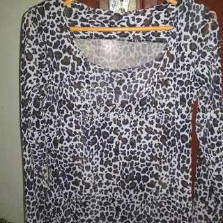 Kaus leopard