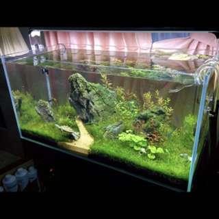 Brand new fish tank