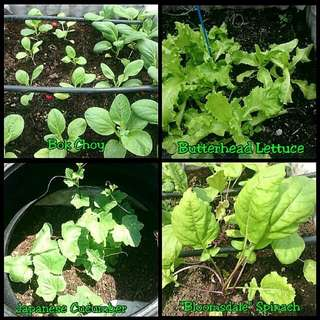 """GARDENING/SHARING - Happy Seeds In An Organisation In Singapore -  For Juz.Carouseling """"Sharing Is Caring"""" Series"""