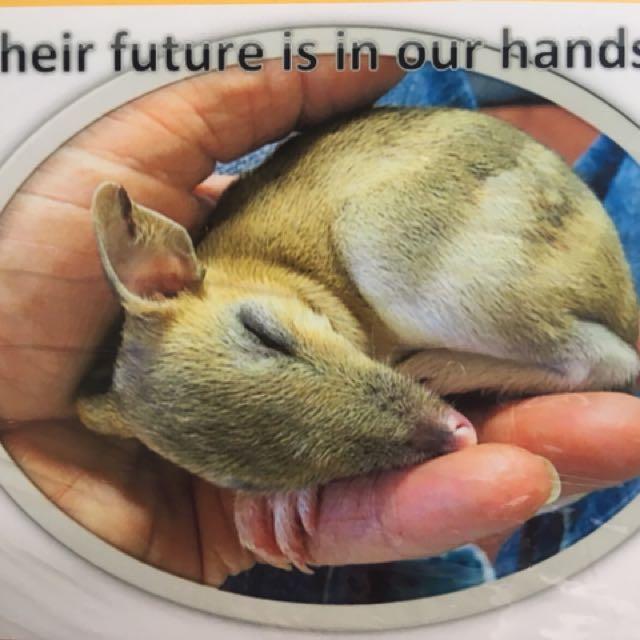Unique Pam made cards 100% to wildlife 💖