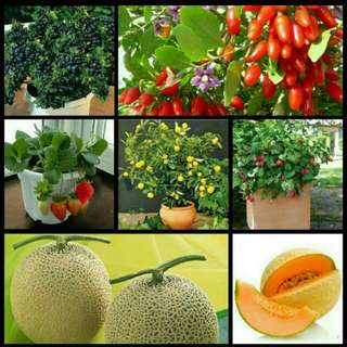GARDENING - Fruits Seeds For Sale