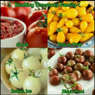 GARDENING - Healthy Tomatoes Family Seeds For Sale