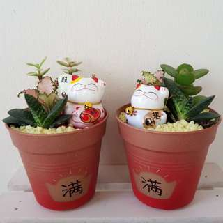 Mixed Succulents with Fortune Cat Figurine