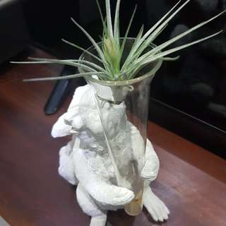 Air plant with squirrelq stand