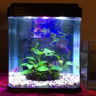 Betta Tank - Brand New with Accessories