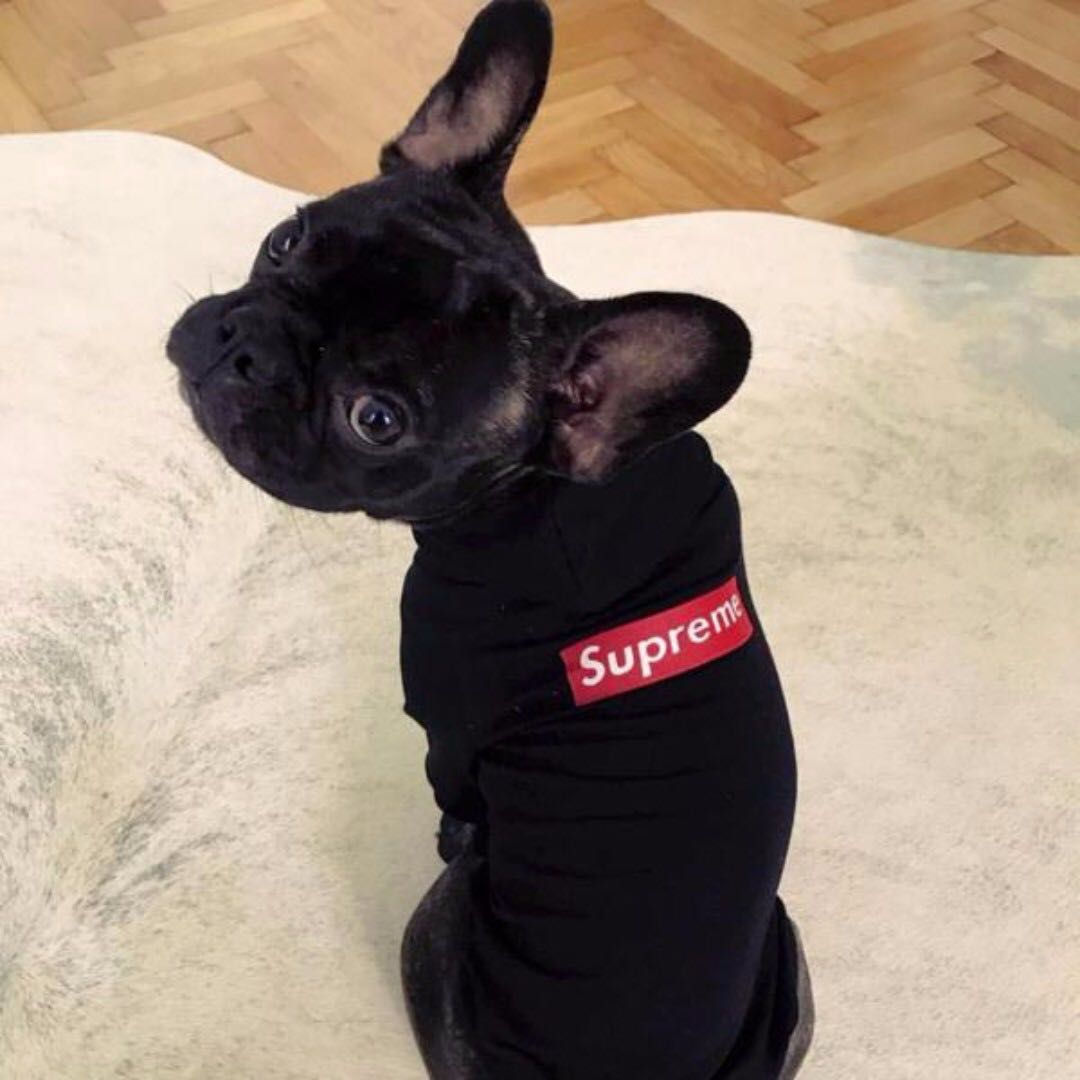 Supreme Dog Clothings, Pet Supplies On Carousell