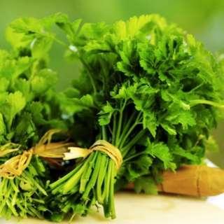 Herbal Leafy Parsley 'Festival 68' (Petroselinum Crispum)  1200 Seeds