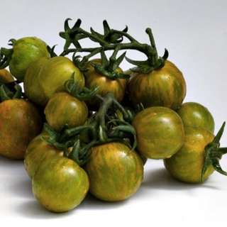 Artisan Cherry Tomato 'Emerald Green Cherry' (Solanum Lycopersicum) Vegetable Heirloom, 20 Seeds
