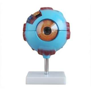 XC316 Eye Model