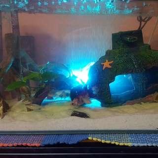 Selling aquarium full set