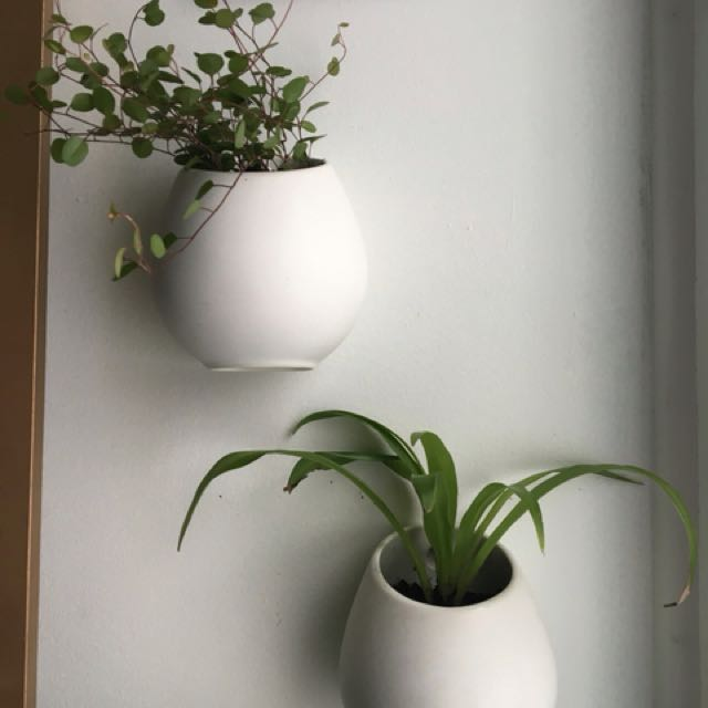 Wall mounted planters