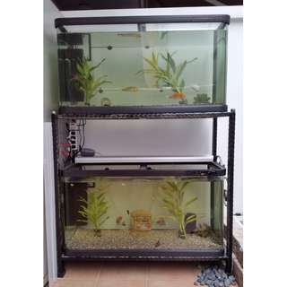 Fish Tank Aquarium Set for sale