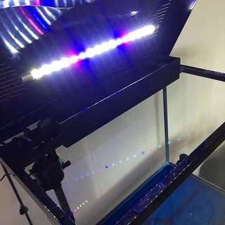 Aquarium Fish Tank- Simple and Chic full set