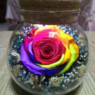 Real preserved  rainbow rose in led light glass